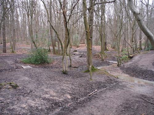 Wormleybury Brook crossing, Wormley Wood