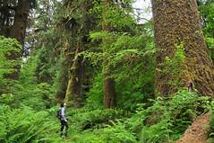 Hemlock & Spruce