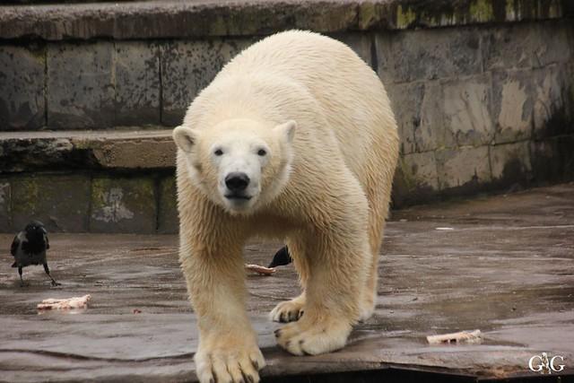 Besuch Zoo Rostock 12.03.20166