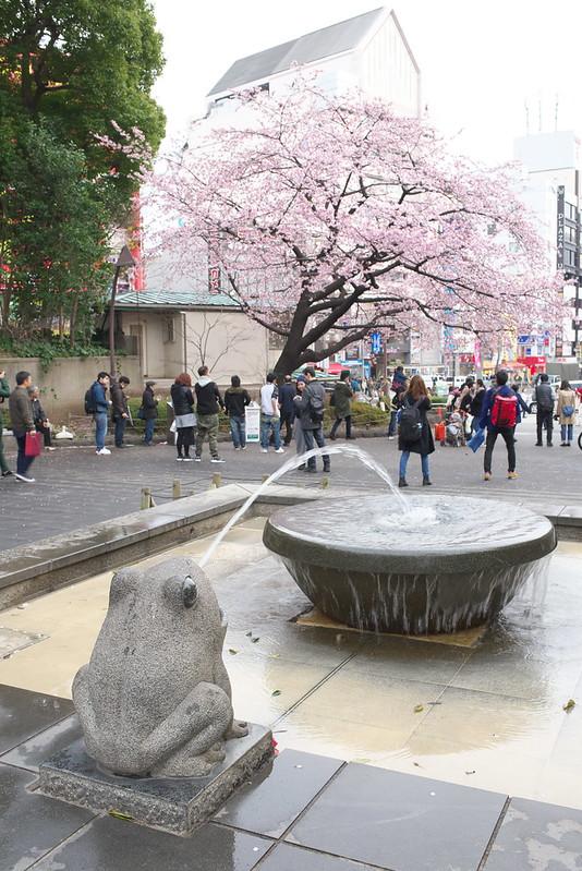 上野公園のオオカンザクラ 2016年3月6日