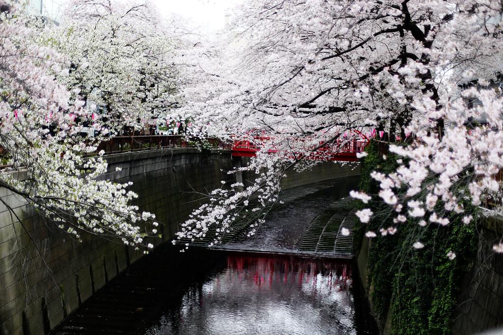 Www. Cherry Blossom asiatiska dejting