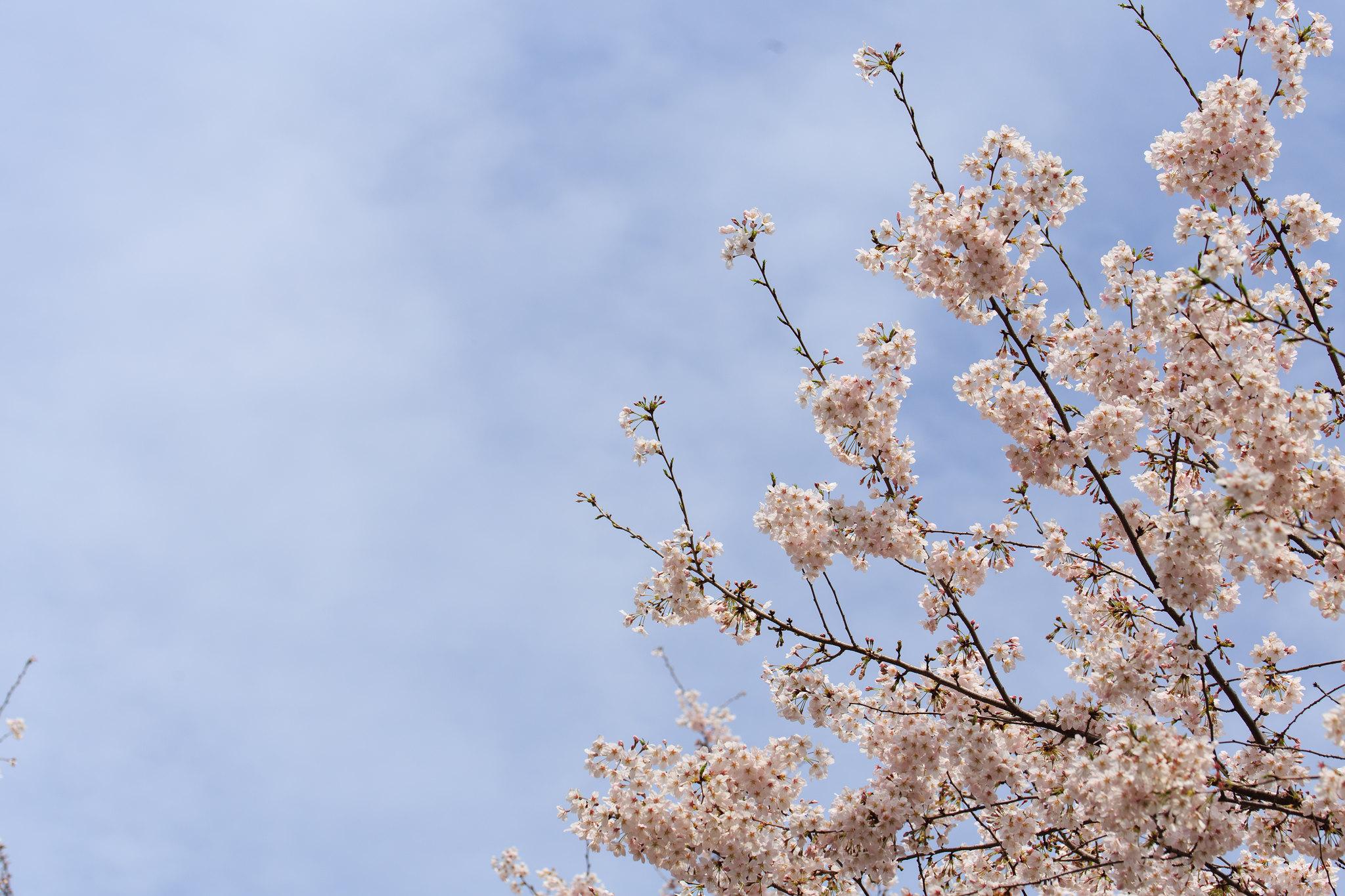 2016-04-04 千鳥ヶ淵 001-8