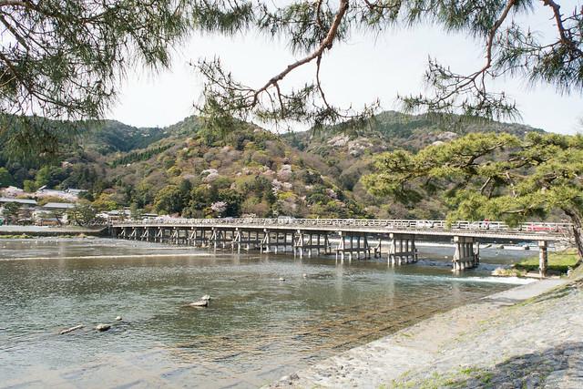嵐山、渡月橋で満開の桜
