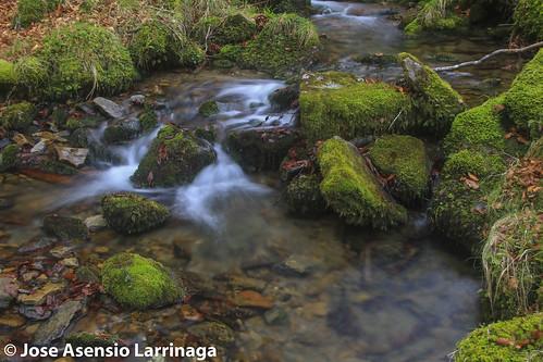Parque Natural de Gorbeia #DePaseoConLarri #Flickr -2583