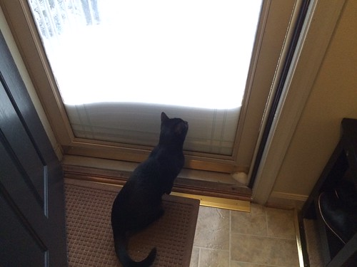 Cat and Storm Door Snow Buildup #snow #blizzard2016