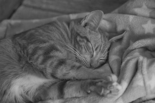 124 - I mörkret är alla katter grå