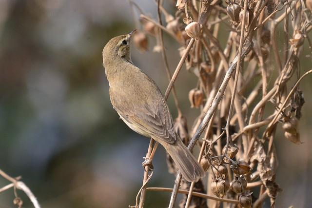 sparrow_1.4x
