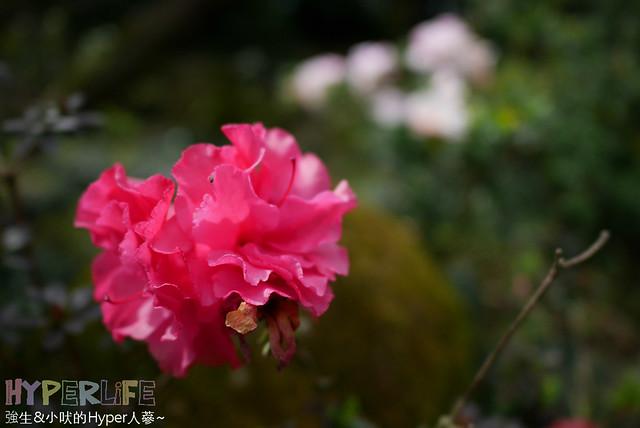 2016台中新社千樺 (61)