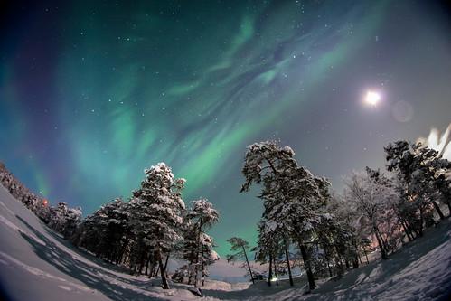 Auroras at Rovaniemi