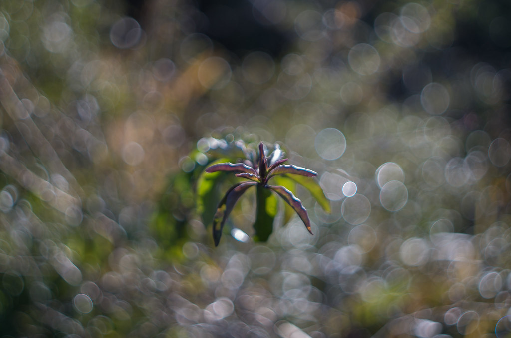 soap bubble bokeh