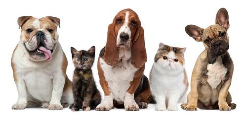 Домашні тварини кіт собака