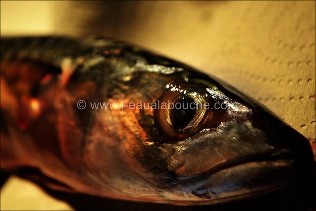 Maquereaux Grillés à la Plancha © Ana Luthi Tous droits réservés 0003