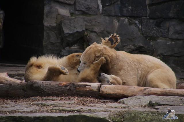 Tierpark Berlin 24.02.2016   180