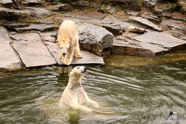 Tierpark Berlin 25.03.2016  050