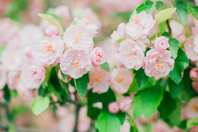 Spring-8