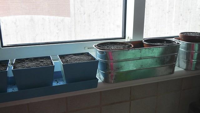 Seed Starting 8