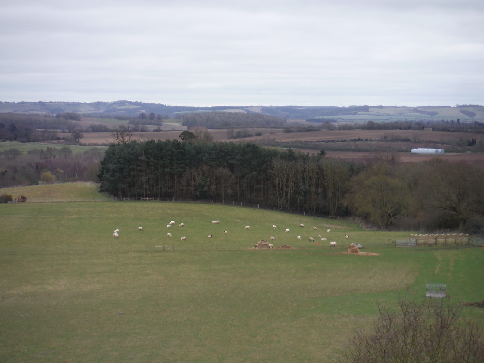 Chilterns View from tower of Old St. Mary's Church, Clophill SWC Walk 231 Flitwick Circular