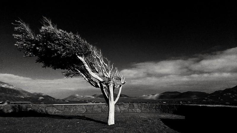Tree in Lanzarote