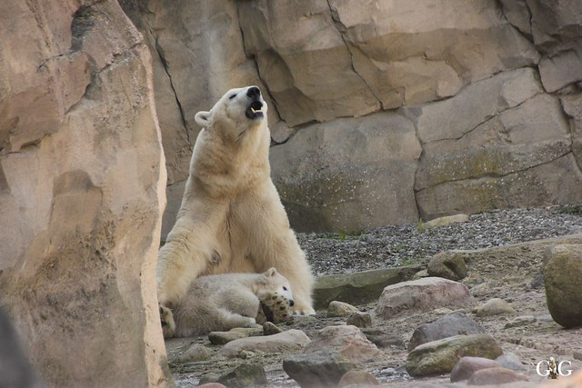 Zoo Bremerhaven 10.04.16 2.Teil55