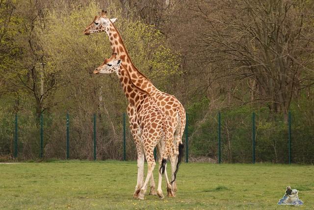 Tierpark Berlin 17.04.2016  079