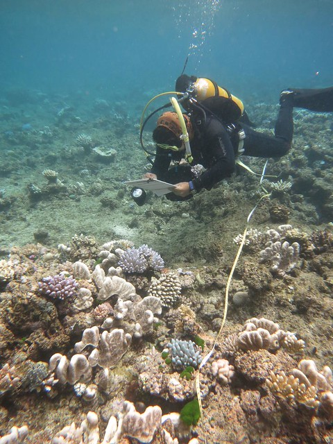 圖4. 研究人員(郭兆揚)正在沿著穿越線調查珊瑚的白化程度。此處的珊瑚礁曾受到颱風的破壞。圖片來源:Andrew Baird