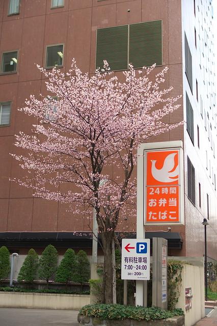 2016428のホテルモントレエーデルホフ札幌の桜_03