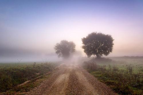 road morning trees colors fog alberi sunrise canon landscape countryside strada alba m campagna dirt mauritius nebbia discovery per colori viterbo paesaggio maurizio mattina mercuri tuscia scoperta sterrata viterbese celleno