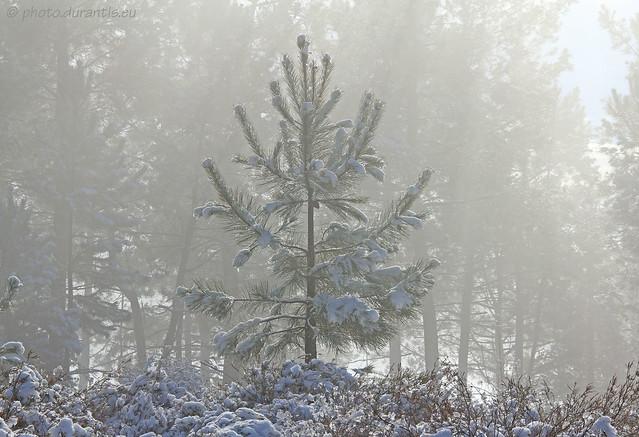La neige et le soleil X