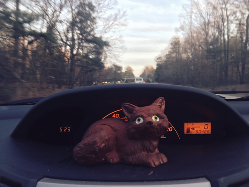 Fox in Ana's Car (February 13 2015)
