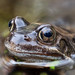 and here's a frog by Iain Lawrie