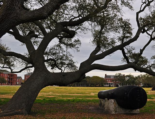 Fort Monroe, Live Oak (Quercus virginiana) (5)