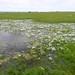 meadow foam by randomtruth
