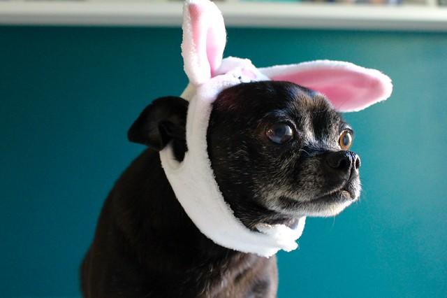 Hoppy Easter 🐇
