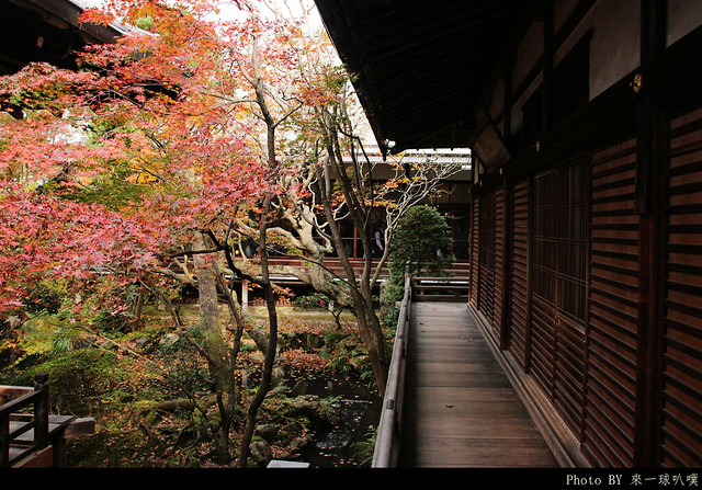 京都-永觀堂102
