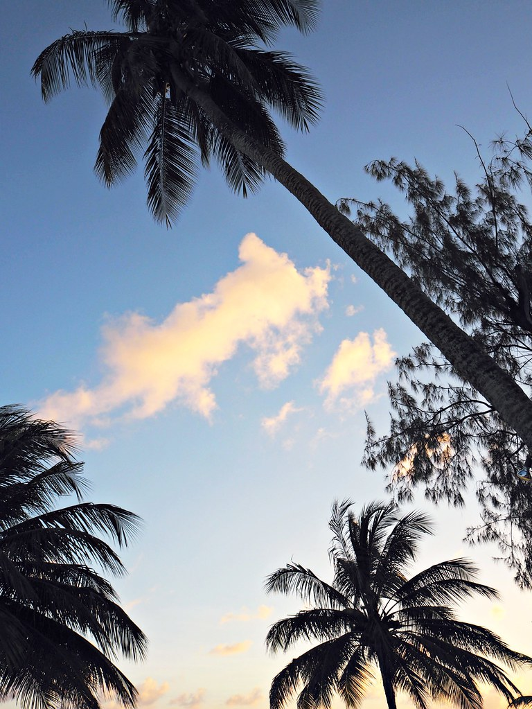 The Little Magpie Southern Palms Barbados Review 12