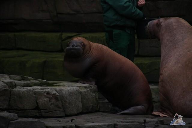 Tierpark Hagenbeck 02.01.2015   86