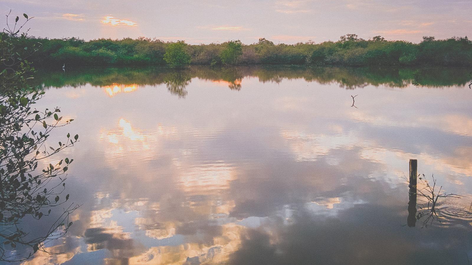 Divar Mangroves