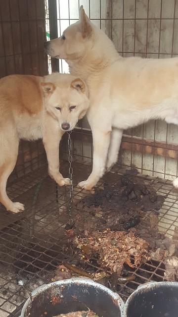 Nami Kim team rescues from Bucheon dog farm