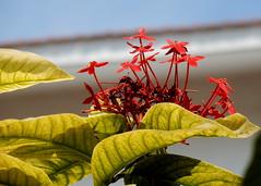 Coimbatore garden