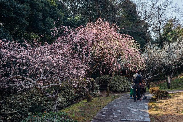 Hirashiba-Park_06