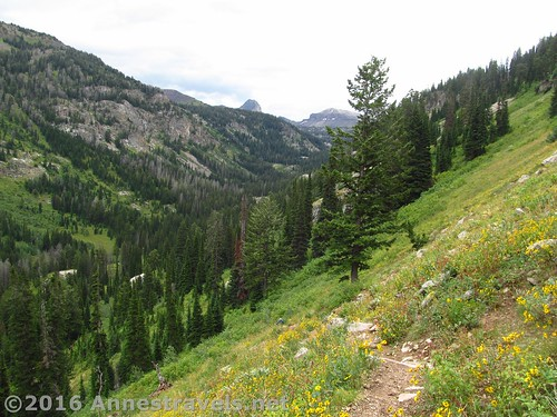 On the lower reaches of the Stairway to Heaven Trail, Jedediah Smith Wilderness and Grand Teton National Park, Wyoming