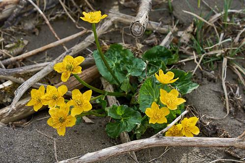 Frühling im Lechtal