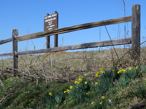 Blue Spring Branch