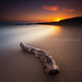 Plum Island Beach Driftwood and Pristine Sand at Sunrise, Newburyport Massachusetts by Greg DuBois - Sponsored by LEE Filters