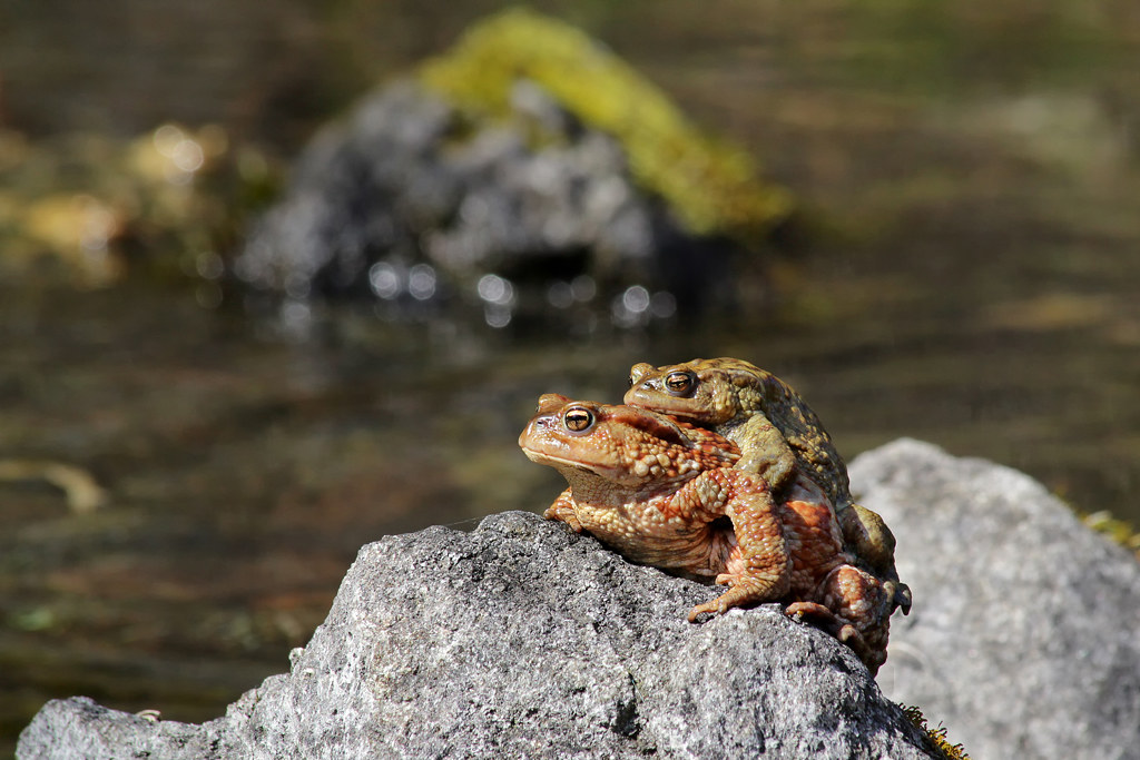 Valsesia - lago di Sant'Agostino, primavera d'amore..;-)