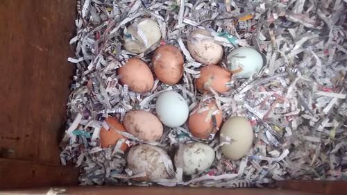 eggs Apr 16 2