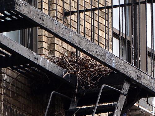 JHW Hawk Nest - 6846
