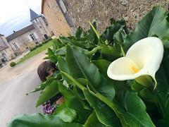 Cache-cache au Maine Giraud, domaine viticole et maison du poète Alfred de Vigny pour cette nouvelle rencontre Social MixCity 2 Charentes #socialmixcity2charentes #socialmixcity #igerscognac #LaCharente #cognac #patrimoine #spring #flowers