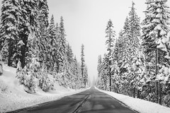 Wintery Road Wonderland