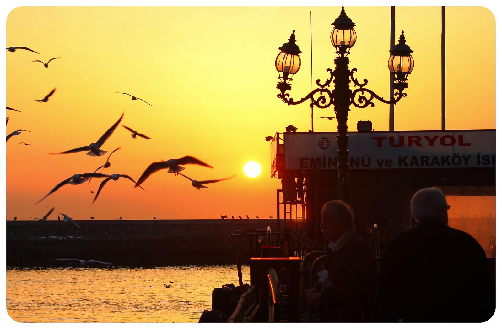 istanbul sunset birds